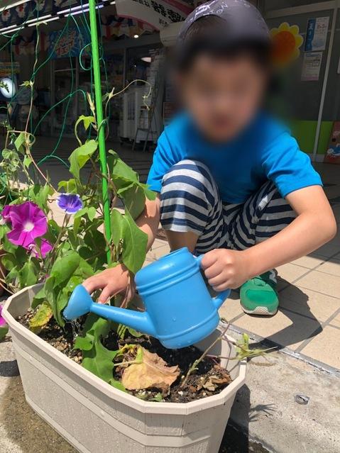 あくしすで育てているお花です。毎日こどもたちが交代で水をあげてくれました☆